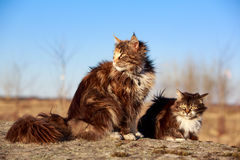 Two cats. Sit on rock Stock Images