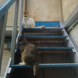 Two Cat Synchronization on the stair