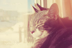 Two cats sit on window Royalty Free Stock Image
