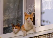 Two cats sit on the window. Stock Images