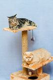 Two cats sits on a cat tower Stock Photos