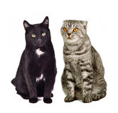 Two cats sitting Stock Photos