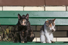 Two cats sitting on green wooden bench in front of a brick wall Royalty Free Stock Photo