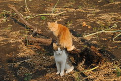 Two cats sitting on the ground Royalty Free Stock Images