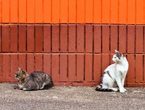 Two cats sitting near wall Royalty Free Stock Photo