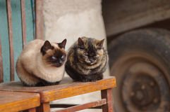 Two cats sitting on an old chair and having rest Royalty Free Stock Images