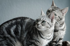 Two cats sitting on old wood shelf Stock Images