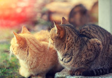 Two cats sitting outdoors Stock Photography