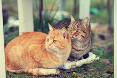 Two cats sitting outdoors Stock Photo