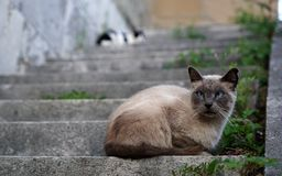 Two cats sitting on a staircase Stock Photography