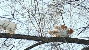 Two cats sitting on a tree branch. Two  cats sitting on a tree branch stock video