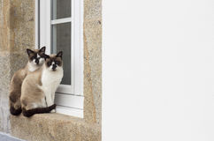 Two cats sitting on a window Royalty Free Stock Photo