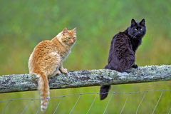 Two Cats sitting on wooden fence Stock Photo