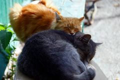 Two cats sleep together on a bench near the house Stock Photography