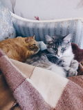 Two cats sleep together Royalty Free Stock Photo
