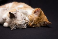 Two cats sleep in an royalty free stock photos