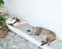 Two cats sleep Stock Image