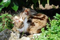 Two Cats Sleeping Stock Image