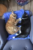 Two cats sleeping in an armchair at home, view from above. Stock Image