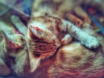 Two cats sleeping royalty free stock photos