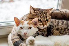 Two cats are sleeping in an embrace in the basket royalty free stock images