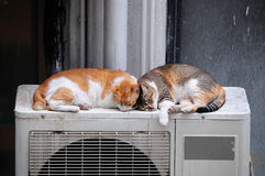 Two Cats Sleeping Outdoors Royalty Free Stock Photos