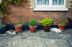 Two cats sleeping outside a house Royalty Free Stock Images
