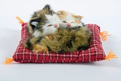 Two Cats sleeping plush. Two sleeping cats on a pillow plush on a white background Royalty Free Stock Image