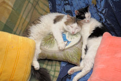 Two cats sleeping together Stock Photography