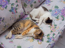 Two Cats Sleeping Together Royalty Free Stock Photos