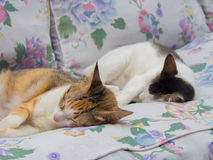 Two Cats Sleeping Together Stock Photos