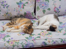Two Cats Sleeping Together Stock Images