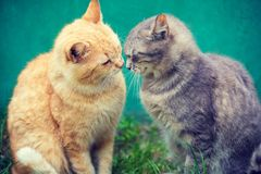 Two cats sniffing to each other stock photography