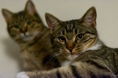 Two cats staring at the camera stock photos