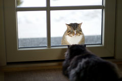 Two cats staring at each other royalty free stock image