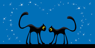 Two cats and stars Stock Photo