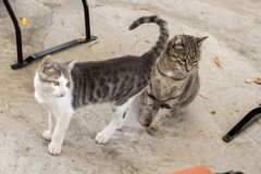 Two cats on a street. Watching carefully at a fixed point Royalty Free Stock Images