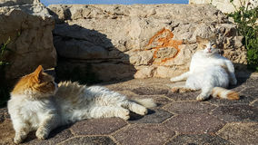 Two cats are sunbathing and basking in the sun Royalty Free Stock Photo