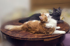 Two cats on table Stock Photo