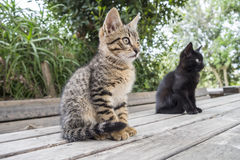 Two cats on a table staring at something Stock Images