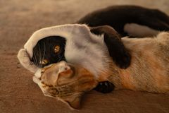 Two cats are teasing each other stock photo