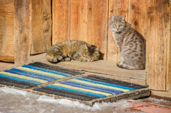 Two cats on a threshold of an old log house. Two cats, bask in the sun, on a threshold of an old log house Stock Photos