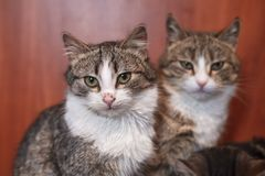 Two cats together indoors shelter. royalty free stock images