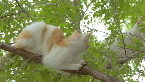 Two cats on the tree slow motion video. The cat on the tree climbs the second cat clinging to the branch breaks slow motion video stock video