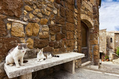 Two cats in a tuscany typical street Stock Photography
