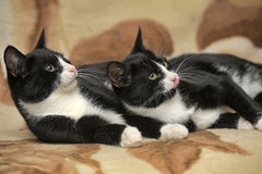 Two cats are twins Royalty Free Stock Photo