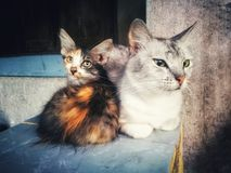 Two cats. Are sitting the sun in the morning stock photo