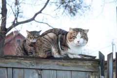 Two cats. Sitting on a wooden fence Stock Photos
