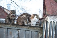 Two cats. Sitting on a wooden fence Royalty Free Stock Photography