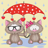 Two Cats with umbrella Royalty Free Stock Images